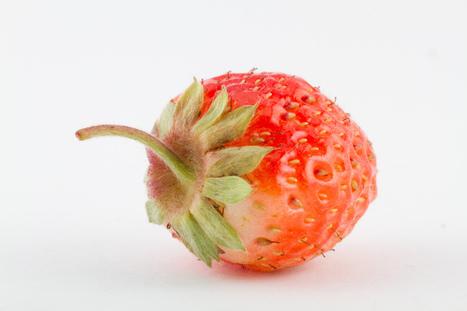 Starting A Raw Food Diet: Raw Food Diet Ideas | Raw Food Diet | Scoop.it