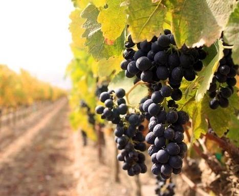 España podría ser este año el primer productor mundial de vino | Red Restauranteros - Marketing & Technologia | Scoop.it