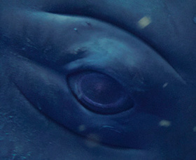 You're Eye-to-Eye With a Whale in the Ocean. What Does It See? | PhysicsLearn | Scoop.it