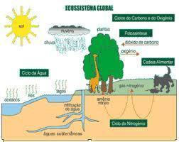 Ecossistema   Biologia-aulas de 2013   Scoop.it