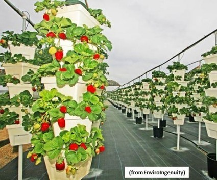 Vertical, Hydroponic Farming the Future of Farming? – CleanTechnica | Aeroponics | Indoor Gardens | Hydroponics | EnviroJMS | Scoop.it