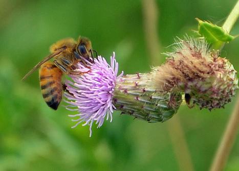 Londres, the place to be pour les abeilles | zegreenweb | Génération en action | Scoop.it