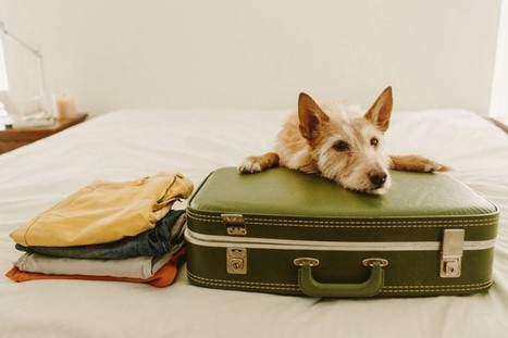 Pets Welcome: Hotel Pet-Etiquette for Traveling with Your Dog | NuVet Plus Reviews | Scoop.it