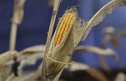 Syngenta : une acquisition dans le sud de l ' Afrique - Boursier.com | Développer l'industrie agroalimentaire en Afrique | Scoop.it