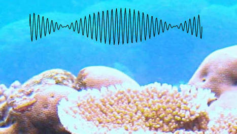 ScubaTone Powers Underwater Communication Using Landline Tech From 1963 - Fast Company | ScubaObsessed | Scoop.it