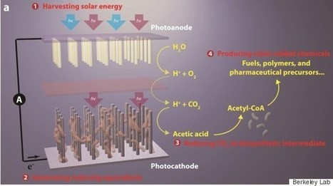 Artificial Photosynthesis Advance Hailed As Major Breakthrough | Amazing Science | Scoop.it