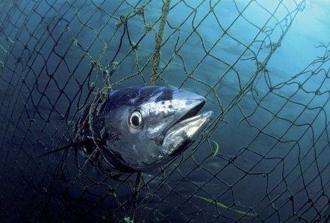 Humanity driving 'unprecedented' marine extinction | Oceans and Wildlife | Scoop.it