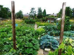 Small-scale, urban allotments yield food, healthy soil, study finds | Science-Into Food Security | Scoop.it