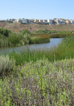 Playa Vista Overcomes ItsObstacles | Sustainable Futures | Scoop.it