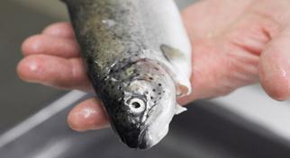 Actu restauration / TECHNIQUES  : Des carnets culinaires pour cuisiner les poissons d'aquaculture   aquacultures   Scoop.it