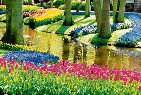 Un jardín llamado Keukenhof - El Universal - Cartagena | El cultivo de gladiolos | Scoop.it