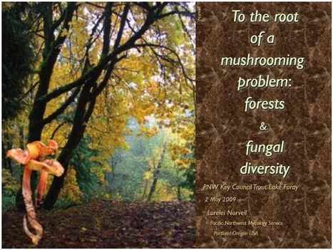 To the root of a mushrooming problem: forests & fungal diversity | Plant pathogenic fungi | Scoop.it