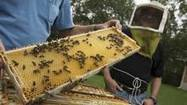 Guelph scientists one step closer to inhibiting destructive bee disease   Help Save Our Beautiful Bees and Wildlife.Together we can make a difference.   Scoop.it