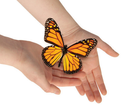8 Ways that you can help save monarch butterflies | Biodiversity protection | Scoop.it
