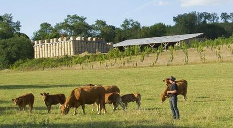 Stéphane LE FOLL confirme la mobilisation du Gouvernement en faveur de l'élevage bovin viande | Agriculture en Gironde | Scoop.it