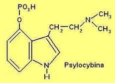 Ciekawostki chemiczne 4, woda królewska, metyloamina, kofeina, hemowanadyny, arszenik, cynober, ruten, kokaina, sylimarol, lit, hafn, psylocybina, betaniny, lasy sosnowe, ciekawostka chemiczna, che...   CIEKAWA CHEMIA   Scoop.it
