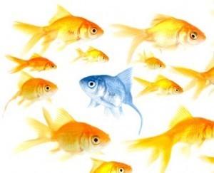 Se faire repérer par un chasseur de têtes en tant qu'experts en intelligence collective | Coaching Politique | Scoop.it