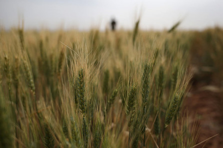 Gluten-free, celiac and allergy travel tips; grains impact weight loss, health - Examiner.com   Living Gluten free   Scoop.it