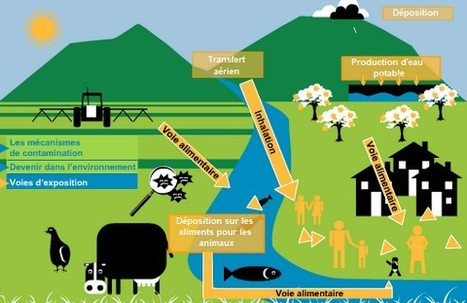 Plan Ecophyto : Stéphane Le Foll maintient l'objectif de 50% de ... - bioaddict   Abeilles, intoxications et informations   Scoop.it