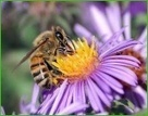 Abeilles et pesticides | Pesticides et biocides | Scoop.it
