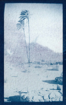 """Egypte en Cyanotype"" Par la photographe Laura Cohen. 