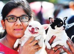 Pet Puja: Learned helplessness - Bangalore Mirror | A Community of Dog | Scoop.it