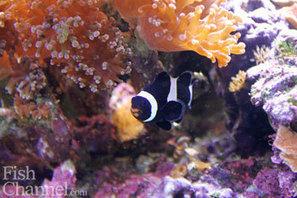 Top Tank Photo Contest! - FishChannel.com   Aquariums   Scoop.it
