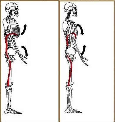 The Scapula and Thoracic Spine: A Classic Love Story To Improve Your Overhead Position - Juggernaut Training Systems | Breath Deep Pilates | Scoop.it