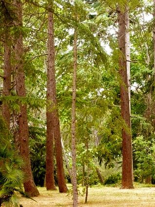 Parque Samá/Parc Samà – Cambrils (Tarragona) « Artesaniaflorae | artesaniaflorae | Scoop.it