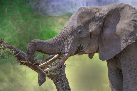 France bans all ivory and rhino horn trade | KNOWING............. | Scoop.it