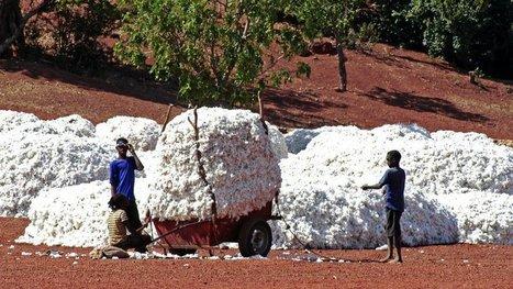 Le Burkina Faso Chasse les OGM Monsanto de ses champs de coton. Résultat : une récolte miraculeuse ! | Cosmétique - Bio - Well being | Scoop.it