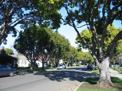 A quoi servent (vraiment) les arbres en ville ? | Nouveaux paradigmes | Scoop.it