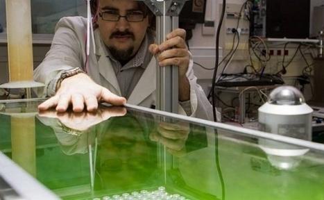 Algoroute : un bitume végétal à base de micro-algues | CRAKKS | Scoop.it