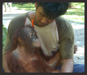 Palm Oil Action | Say No To Palm Oil | Scoop.it