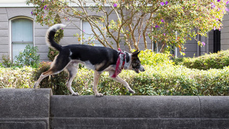 How to turn a dog walk into an urban agility challenge | A Community of Dog | Scoop.it