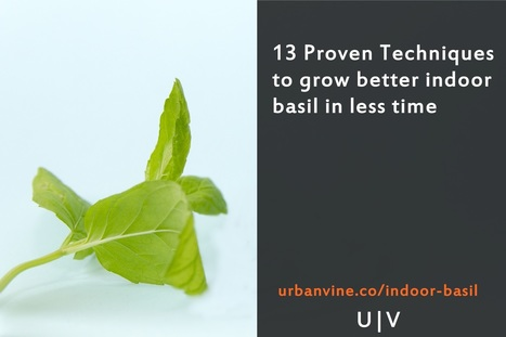 13 Proven Techniques to grow better indoor basil in less time | Organic Farming | Scoop.it