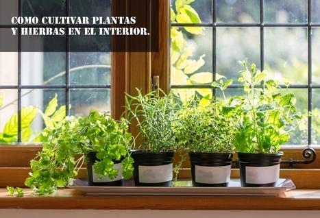 ¿Quieres cultivar tomillo en casa? | Agroindustria Sostenible | Scoop.it