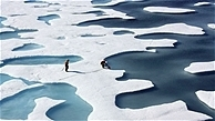 Arctic ice could vanish in 10 years, scientists warn | Digital Sustainability | Scoop.it