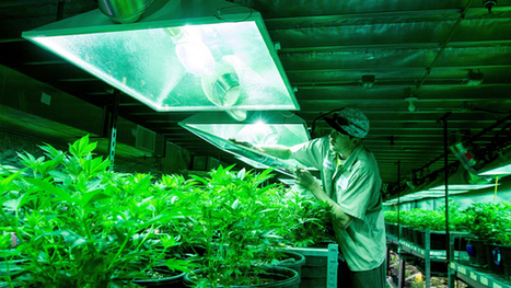 This is how much energy it takes to legalize weed | Criminology and Economic Theory | Scoop.it