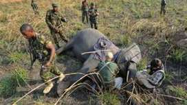 Poaching for ivory stabilises but elephant decline continues - BBC News | Conservation | Scoop.it