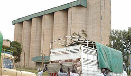 Zambia: Sell old maize stock first, FRA urged | MAIZE | Scoop.it