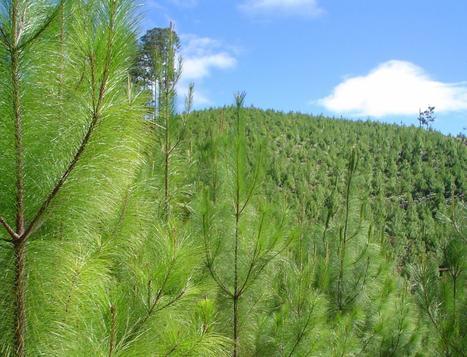 reforestacion.jpg (1406x1074 pixels) | El Negocio De La Reforestacion. | Scoop.it
