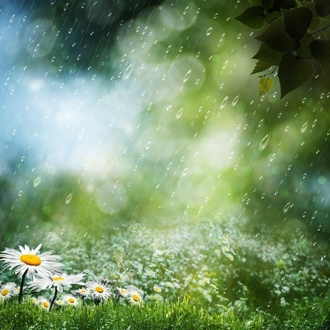 Stop Hating Rain... It's good for the Garden   Gardening Galore   Scoop.it