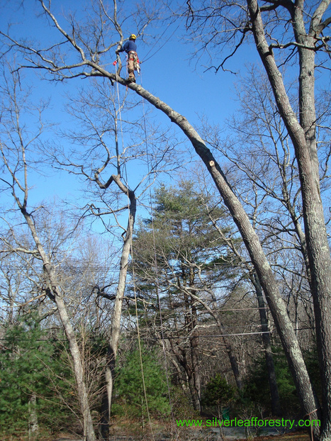 How to Choose the Right Tree Service | Choosing the Best Tree Removal Company in Decatur GA | Scoop.it