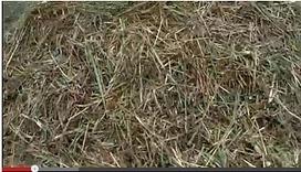 Ecolo-bio-nature: Permaculture : l'importance du paillis   Terr@brest : l'actualités et les acteurs de la bio et de la permaculture en pays de Brest   Scoop.it