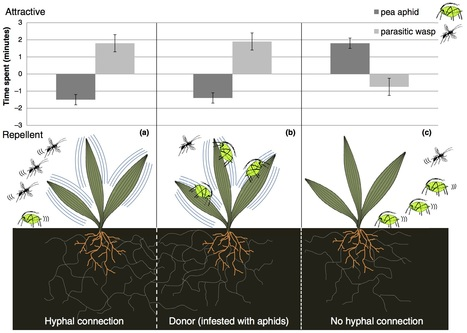 Current Opinion in Plant Biology: Signals and cues in the evolution of plant–microbe communication (2016) | Emerging Research in Plant Cell Biology | Scoop.it