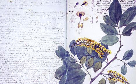 Biblioteca Digital del Patrimonio Iberoamericano | Crónicas de Lecturas | Scoop.it