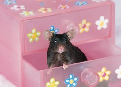 Top Five Reasons to Stop Animal Testing | Banning of Cosmetic Animal Testing | Scoop.it