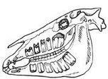 Dental Care | Horse Health | Scoop.it