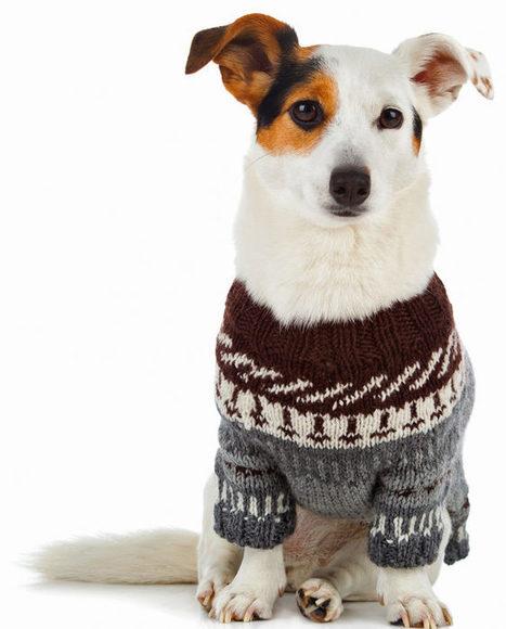Llevar al perro con abrigo no es una horterada | Personas y Animales | Scoop.it